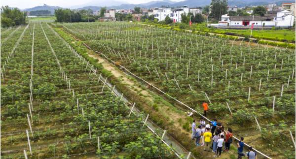 糟蹋扶贫:让更众深圳市民吃上河源优质农产物